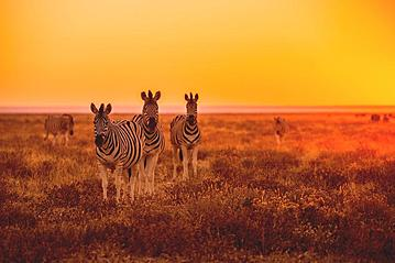Small gettyimages namibia etoscha 498130811 udokies 2019 05 14 online 800x600