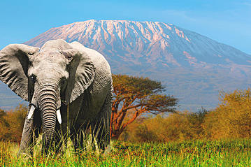 Small 20150208 gettyimages amboseli mit dem kilimanjaro 966223936 1001slide export 600 800