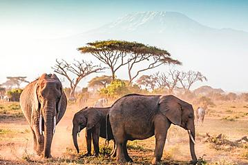 Small gettyimages amboseli np 916145970 1001slide 2019 11 13 export 600 800